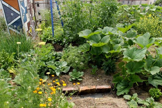 Urbano vrtlarenje